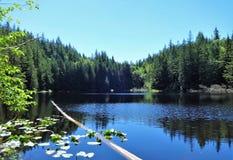 Cedar Lake in de vroege zomer op Chuckanut-berg Stock Afbeeldingen