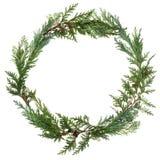Cedar Leaf Wreath Royalty Free Stock Photography