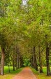 Cedar Lined Brick Path lizenzfreies stockbild