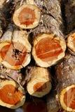 Cedar Logs Fotografía de archivo