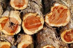 Cedar Logs Arkivbild