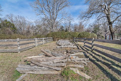 Cedar Logs photos stock