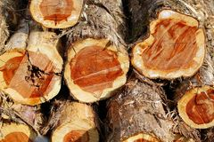 Cedar Logs. Pile of Eastern Cedar Logs stock photography