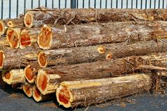 Cedar Logs. Stack of Eastern Cedar Logs royalty free stock photo