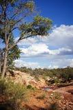 Cedar Mesa en monument national d'oreilles d'ours images libres de droits