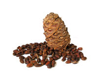 Cedar nut Royalty Free Stock Photos