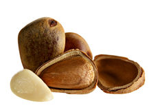 Cedar nut Stock Image