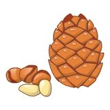 Cedar nut icon, cartoon style. Cedar nut icon. Cartoon of cedar nut vector icon for web design isolated on white background Royalty Free Stock Images