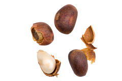 Cedar nut macro Royalty Free Stock Images