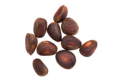 Cedar nut on white Stock Image