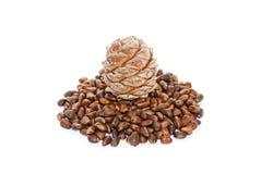 Cedar nutlets Stock Images
