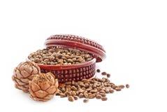 Cedar nutlets Stock Photos