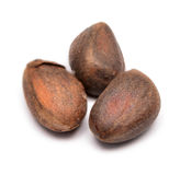 Cedar nuts Stock Photography