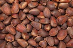 Cedar nuts. Background Stock Image