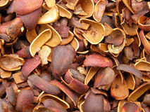 Cedar nuts Stock Photo