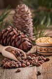 Cedar nuts and branch with cone Stock Photos