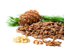 Cedar  nuts and cedar  cones on white background Stock Image