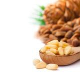 Cedar  nuts and cedar cones on  white background Stock Photos