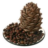 Cedar nuts and cone Royalty Free Stock Photography