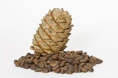 Cedar nuts and cone Stock Photo