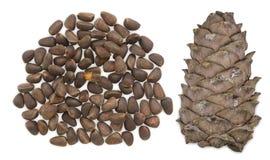 Cedar nuts with cone Stock Photo