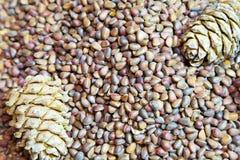 Cedar nuts and cones closeup Stock Photo