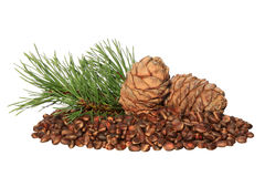 Cedar nuts and  cones isolated on white background Royalty Free Stock Photo