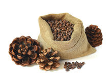 Cedar nuts and a core, cones, bag / isolated / Stock Photography