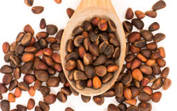 Cedar nuts Stock Images