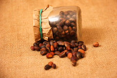 Cedar nuts Royalty Free Stock Images