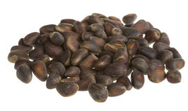 Cedar nuts Stock Photography