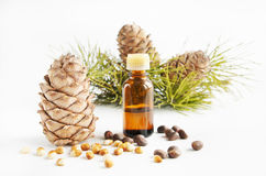 Cedar nuts and oil. On light background Stock Photos