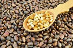 Cedar nuts in a spoon Stock Image
