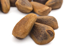 Cedar nuts Royalty Free Stock Image