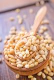 Cedar nuts Royalty Free Stock Photography