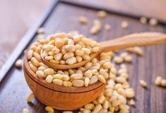 Cedar nuts Stock Images