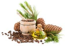 Cedar oil and pine nuts. Stock Photos