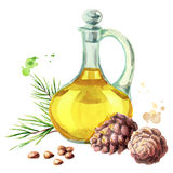 Cedar oil. Watercolor illustration. Cedar oil. Watercolor hand-drawn illustration Royalty Free Stock Photography