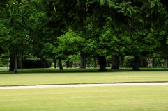 Cedar Park. Old cedar park of castle Cheverny, France Stock Image
