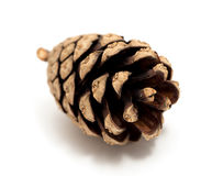 Cedar pine cone isolated on white background.  Royalty Free Stock Photography