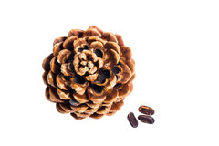 Cedar pine cone isolated on white background Stock Photos