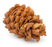 Cedar pine cone with nuts Stock Photo