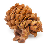 Cedar pine cone and nuts Royalty Free Stock Photography