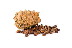 Cedar pine cone with nuts isolated on white background Stock Photography