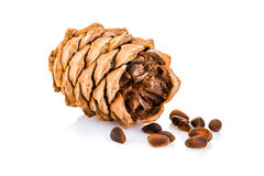 Cedar pine cone with nuts isolated on white background Stock Photo