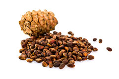 Cedar pine cones with nuts isolated on white background Royalty Free Stock Photos