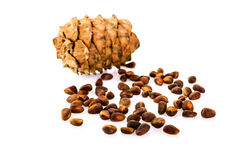 Cedar pine cones with nuts isolated on white background Royalty Free Stock Images
