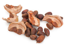 Cedar pine nuts Stock Photography
