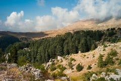 Cedar Reserve Tannourine, Libanon Arkivfoton