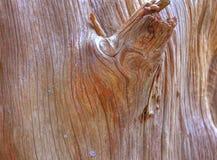 Cedar stump. Grainy stump of cedar tree royalty free stock photography